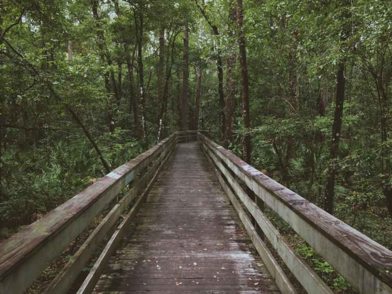 mapping the customer journey as a bridge through the woods