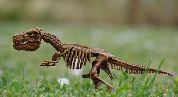 small dinosaur bones model is like the digital customer experience