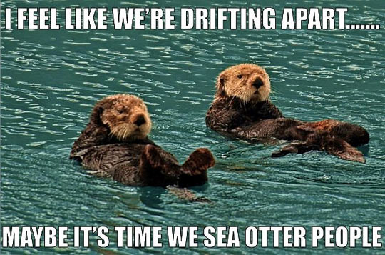 funny otter meme draws parallels with how to calculate customer attrition rate and understand customer retention