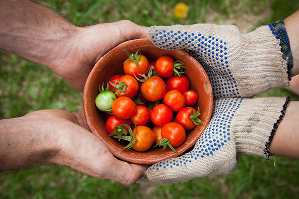 hands holding tomatoes to show FSMA for customer service